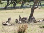 Roos @ Philip Island
